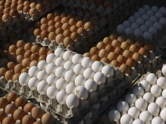 Duck Eggs and Chicken Eggs - Eggs