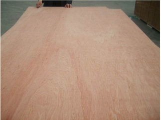 Competitive Bintangor  Plywood - TY3